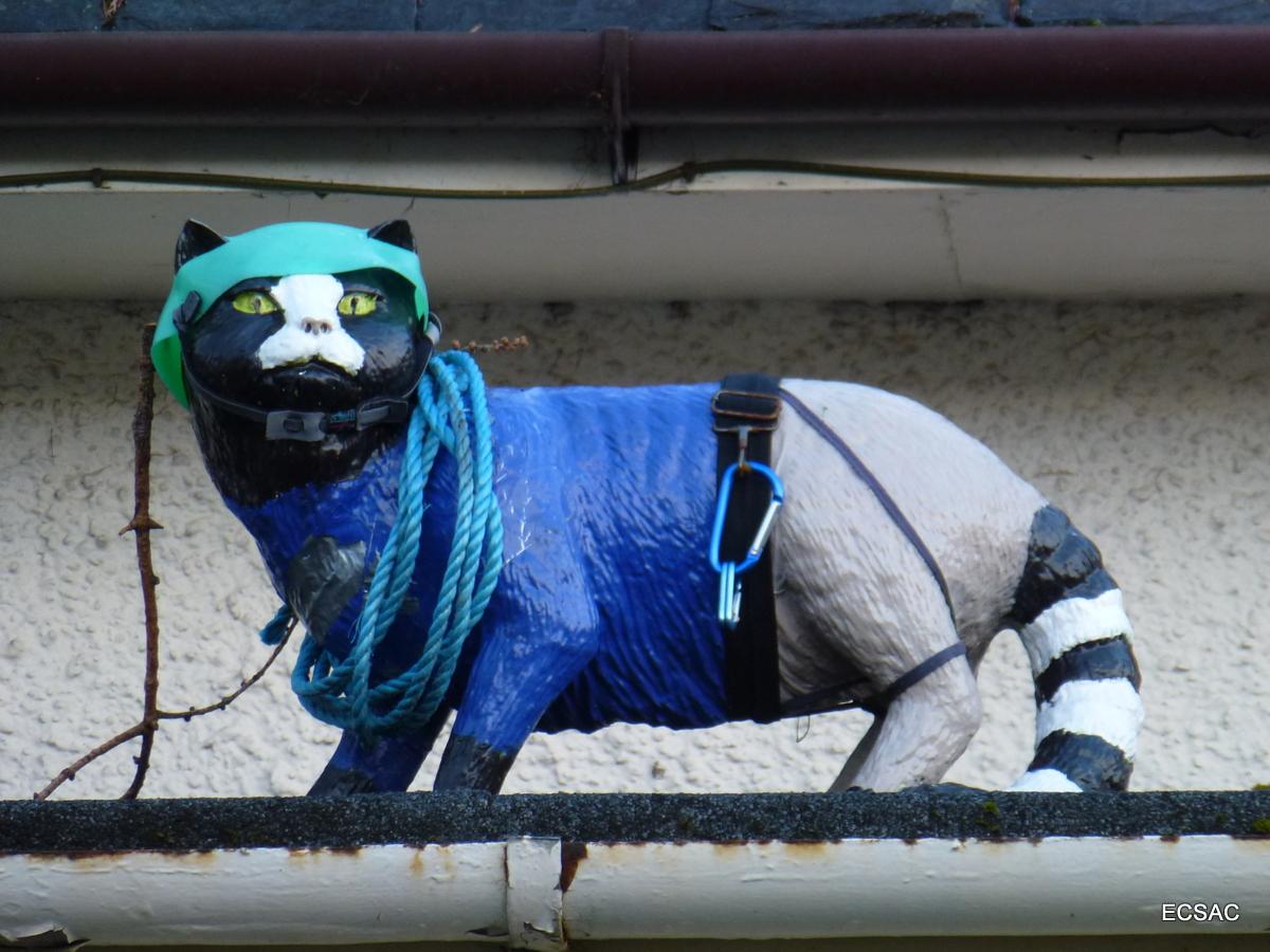 6) Scottish wildcat